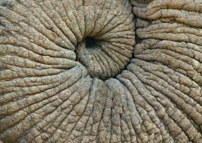 spirale avec la trompe d'un éléphant